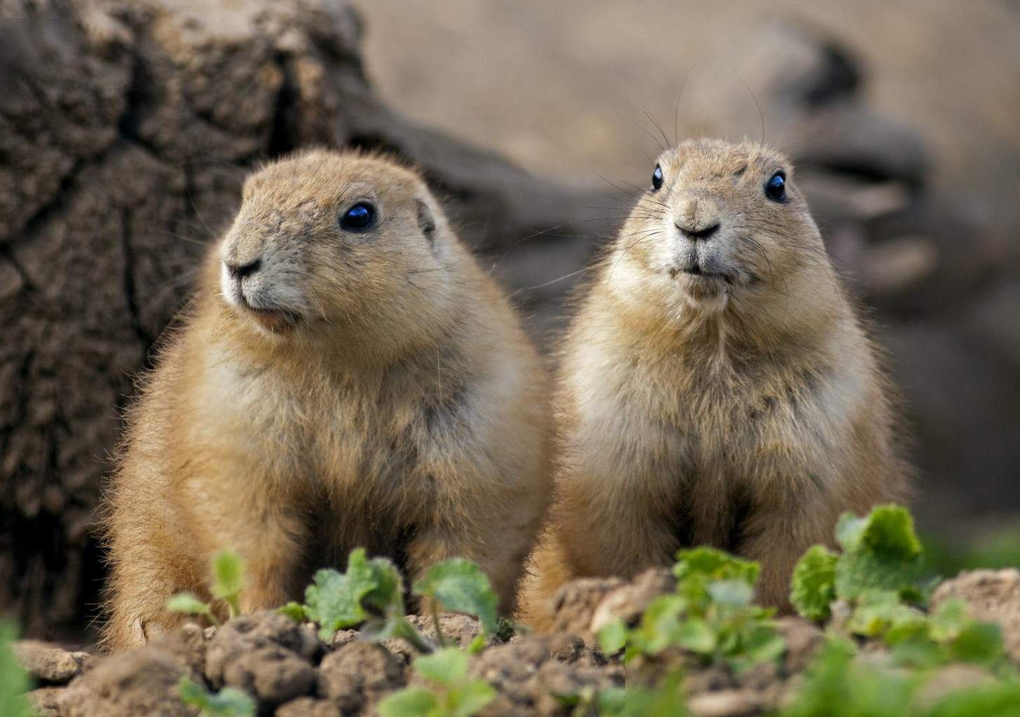 the prairie dog Buy tickets online prairie dog central railway ticket office ticket reservation system book your tickets instantly.