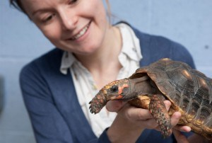 Tortoise, environment influences animal intelligence
