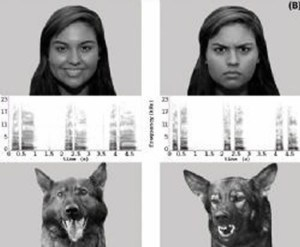 Dog and Human Facial Expressions, dogs recognize human emotions