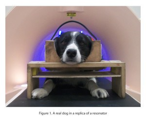 Dog in fMRI scanner
