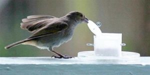 Bird opening food container, Environment Influences Animal Intelligence